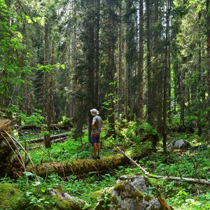 Trekking into the forest in Julian alps