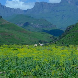 Drakensberg mountain in South Africa & Lesotho