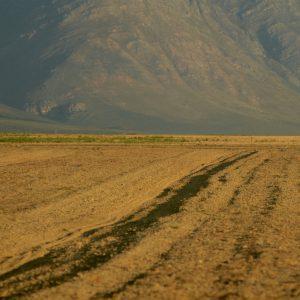 Field meets mountain