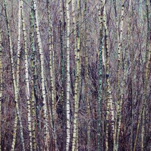 Acid trees