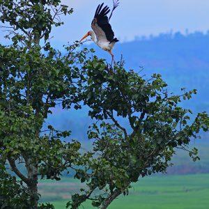 Wild bird in Rwanda