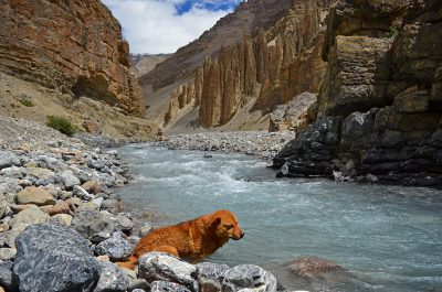 Goemon, the dog we traveled for 5 days in Spiti valley, India