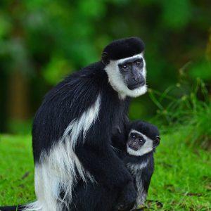 Mum & Baby 2