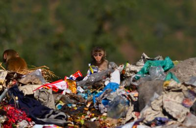 A baby monkey in rubbish pile in Uttarakhland, India