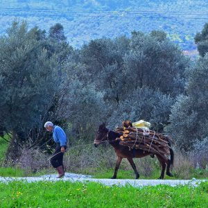 A man and a donkey in Turkey