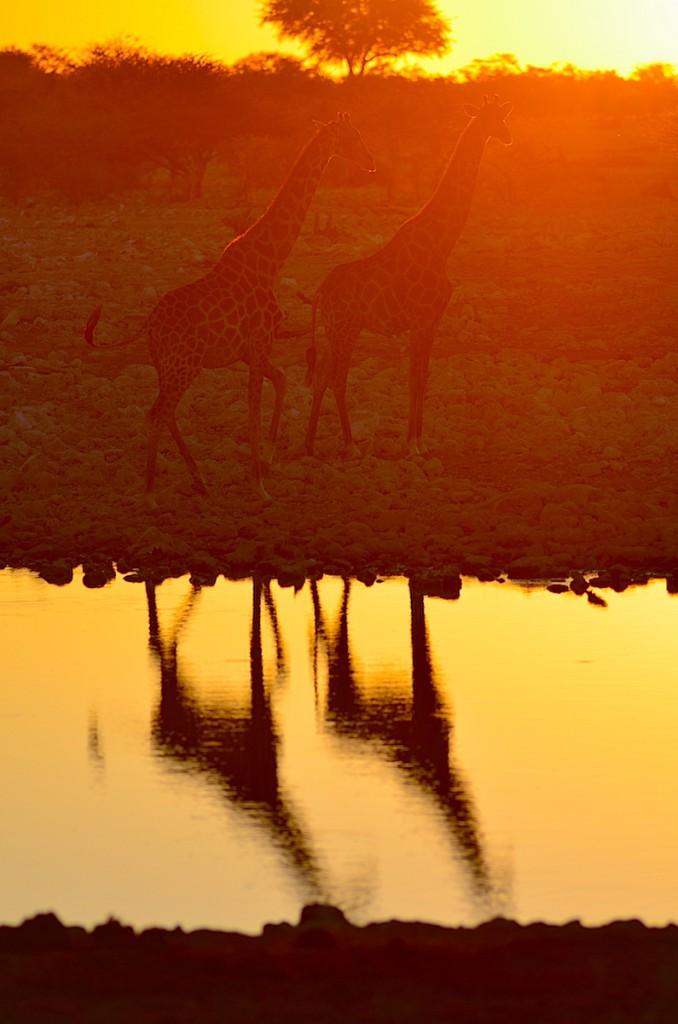 ザ・アフリカ