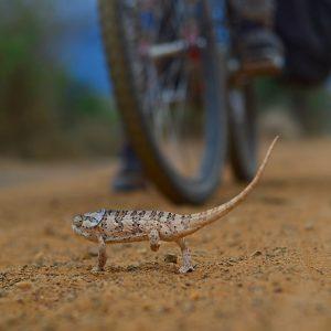 Encounter the little creature.